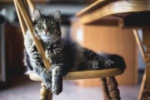 StockSnap_cat