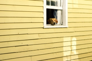 StockSnap_dog in a house