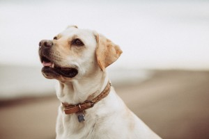 StockSnap_dog