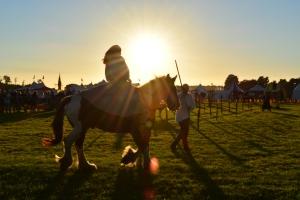 StockSnap_holding horse