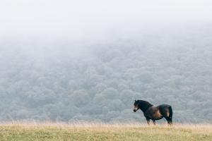 StockSnap_horse