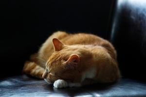 StockSnap_napping cat