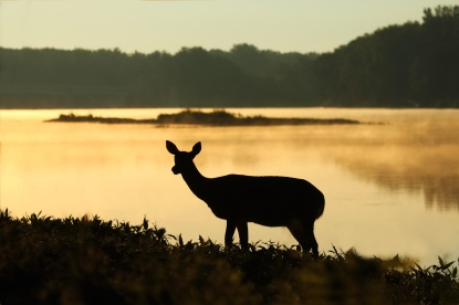 StofelaEnglish - deer